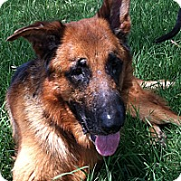 Adopt A Pet :: Riley - Chandler, AZ