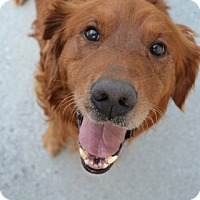 Adopt A Pet :: Fletcher - Knoxville, TN