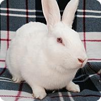 Adopt A Pet :: Stuart - Watauga, TX