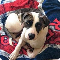 Adopt A Pet :: Kira - Bernardston, MA