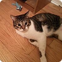 Adopt A Pet :: Abbadon - Toronto, ON