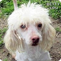 Adopt A Pet :: Betty Lou (Ritzy) - Lindsay, CA