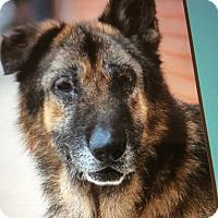 Adopt A Pet :: HIRSCH VON HUGUBERT - Los Angeles, CA