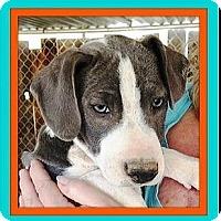 Adopt A Pet :: Jolie - Rancho Cucamonga, CA