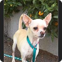 Adopt A Pet :: Spice - Phoenix, AZ