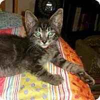 Adopt A Pet :: ZACHEUS - Winterville, NC