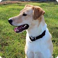 Adopt A Pet :: Jessie - Columbia, IL