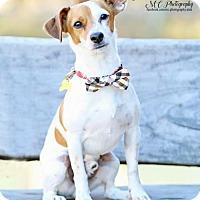Adopt A Pet :: Ruxin - Salt Lake City, UT