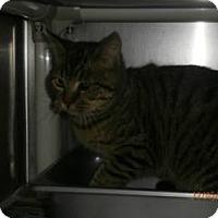 Adopt A Pet :: Roberta - Douglasville, GA