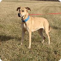 Adopt A Pet :: Aspen - Cameron, MO