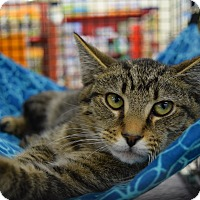 Adopt A Pet :: Stanley - Washington, PA