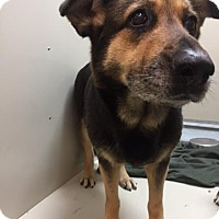 Adopt A Pet :: Fiona - Westminster, CA