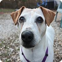 Adopt A Pet :: Jasmine - House Springs, MO