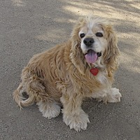 Adopt A Pet :: STEVIE - Toluca Lake, CA