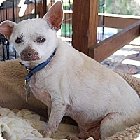Adopt A Pet :: Gummi Bear - Creston, CA