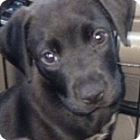 Adopt A Pet :: Maddox - Donaldsonville, LA