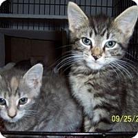 Adopt A Pet :: Gizmo - Island Park, NY