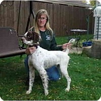 Adopt A Pet :: Gilbert-ADOPTION PENDING! - Columbus, OH