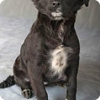 Adopt A Pet :: Jinx - Chicago, IL