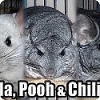 Adopt A Pet :: Bella, Pooh, Chili #10 - Virginia Beach, VA