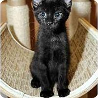 Adopt A Pet :: Raven - Farmingdale, NY