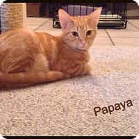 Adopt A Pet :: Papaya - McDonough, GA