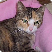 Adopt A Pet :: Amber - Richmond, VA