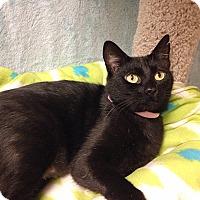 Adopt A Pet :: Ebony - Foothill Ranch, CA