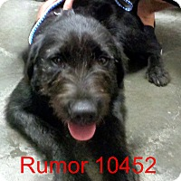 Adopt A Pet :: Rumor - baltimore, MD