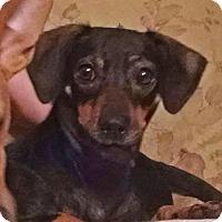 Adopt A Pet :: Simone - Peachtree City, GA