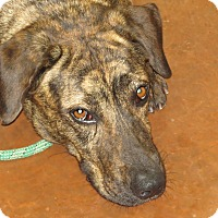 Adopt A Pet :: Lexi - Scottsdale, AZ