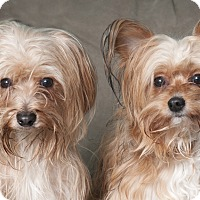 Adopt A Pet :: Eddy & Teddy - Chicago, IL