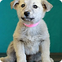 Adopt A Pet :: Krista - Waldorf, MD
