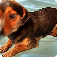Adopt A Pet :: Bob - Trenton, NJ