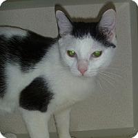 Adopt A Pet :: Moo - Hamburg, NY