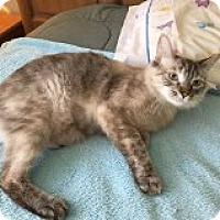 Adopt A Pet :: Glenda - Mesa, AZ
