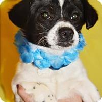 Adopt A Pet :: Skippy - Littlerock, CA