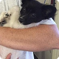 Adopt A Pet :: Spring - Waycross, GA