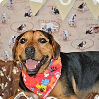Adopt A Pet :: Buster - Okeechobee, FL