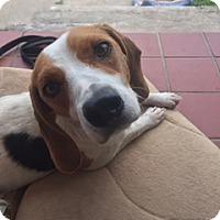 Adopt A Pet :: Gracie  (ETAA) - Washington, DC