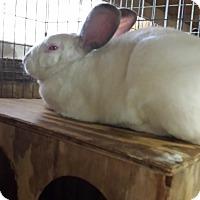 Adopt A Pet :: Spruce - Williston, FL
