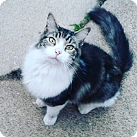 Adopt A Pet :: Wanderer - Chicago, IL