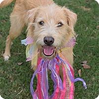 Adopt A Pet :: Nala *ADOPTION PENDING* - Denver, CO