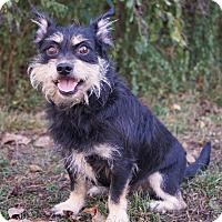 Adopt A Pet :: *Jax - PENDING - Westport, CT