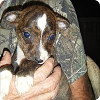 Adopt A Pet :: Milo - Mansfield, TX