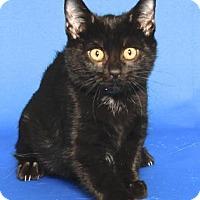 Adopt A Pet :: NORMAN BATES - Gloucester, VA