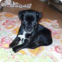 Adopt A Pet :: Little bit and Tiny bit - Richmond, MI