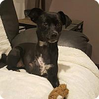 Adopt A Pet :: Roxy - Lisbon, IA
