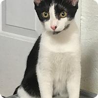 Adopt A Pet :: Picatso LC - Schertz, TX