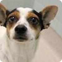 Adopt A Pet :: Georgina 8108 - Columbus, GA